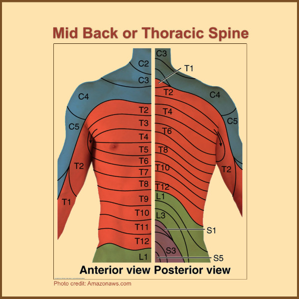 spinal anatomy nerve pain thoracic