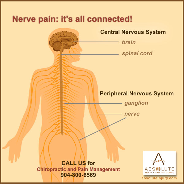 spinal anatomy and nerve pain