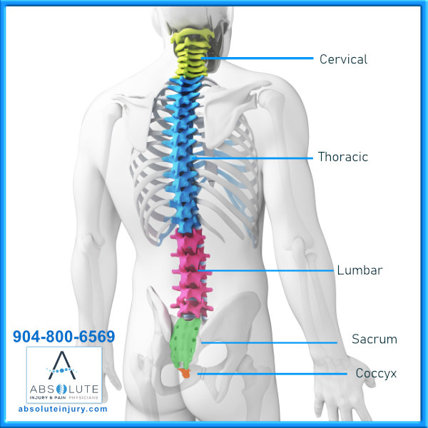 Spine Anatomy 5 regions